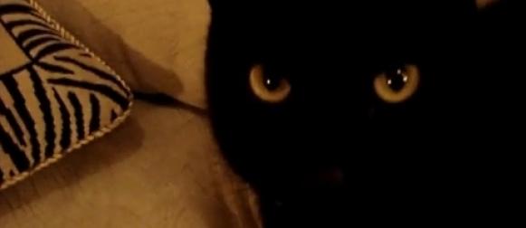 Kotka Puma Kocie Podwórko – zapowiedź serialu