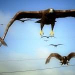 Birdemic 4