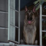 Devil Dog 008